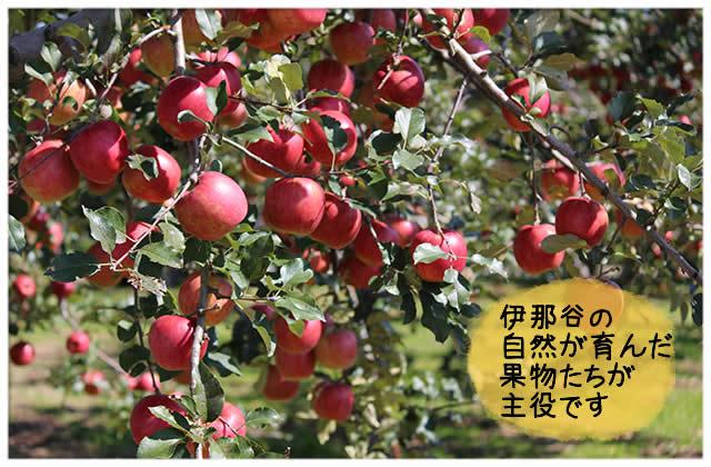 伊那谷の自然が育んだ果物