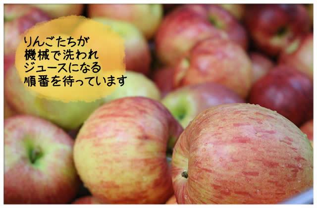 りんごたちが待っています