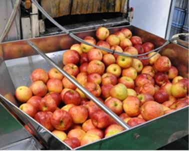りんごの加工